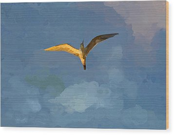 Seagull Sunrise Wood Print by Miguel Pumarejo