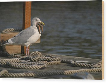 Seagull Swallows Starfish Wood Print by Kym Backland
