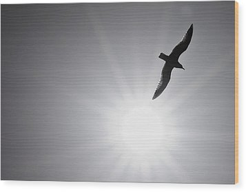 Seagull Wing Touches The Sun Wood Print by Jeramie Curtice