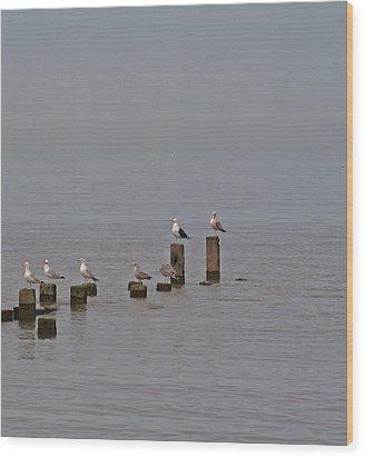 Seagulls At Rest Wood Print by Camera Rustica Bill Kerr
