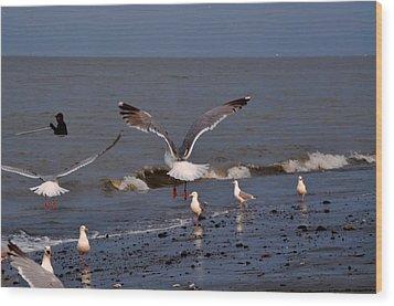 Seagulls Dip Netting  Wood Print by Debra  Miller