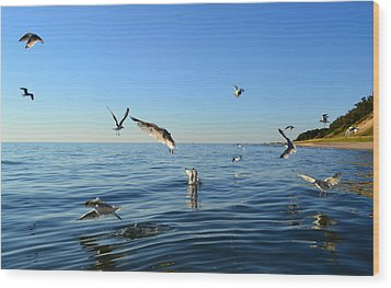 Seagulls Over Lake Michigan Wood Print by Michelle Calkins