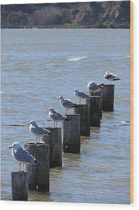 Seagulls Rest Wood Print by Bonnie Muir