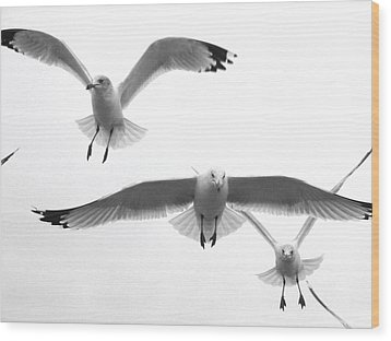 Wood Print featuring the photograph Seagulls Soaring by Lyn Calahorrano
