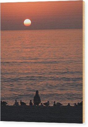Seagulls Watching Sunset Wood Print