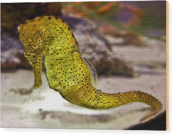 Seahorse Of Course Wood Print by DigiArt Diaries by Vicky B Fuller