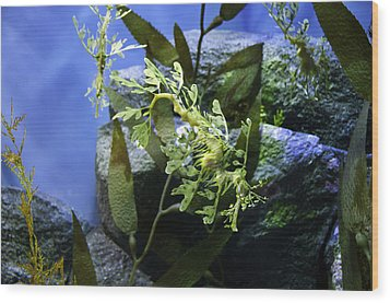 Wood Print featuring the photograph Seahorse by Paul Plaine