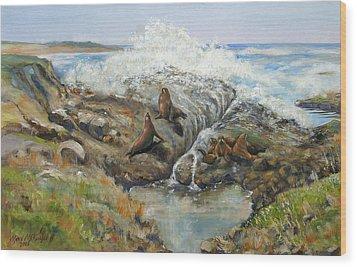 Seal Sanctuary Wood Print by Max Mckenzie