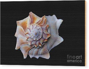Wood Print featuring the photograph Seashell 1 by Deniece Platt