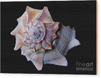 Wood Print featuring the photograph Seashell 5 by Deniece Platt