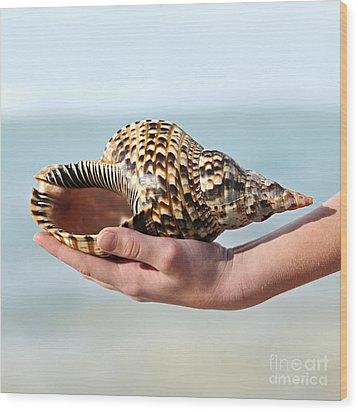 Seashell In Hand Wood Print by Elena Elisseeva