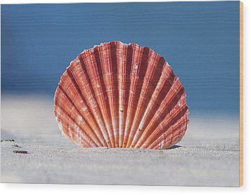 Seashell In Sand With Blue Ocean Background Wood Print by Tanya Ann Photography