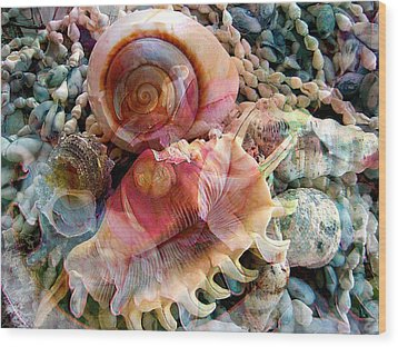 Seashell Reflections Wood Print by Shirley Sirois