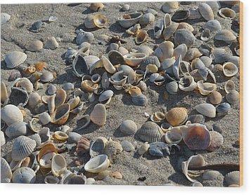 Seashells In The Sand Wood Print by Brenda Thimlar
