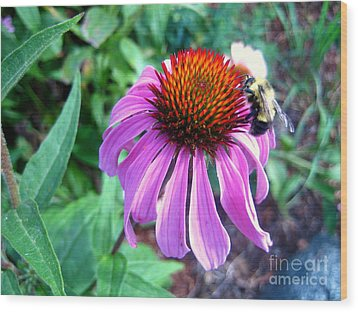 Wood Print featuring the photograph Season For Echinacea  by Kathy Bassett
