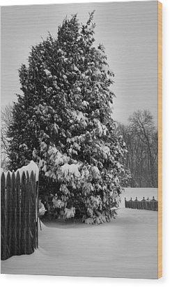 Season Of White Wood Print by Steven Ainsworth