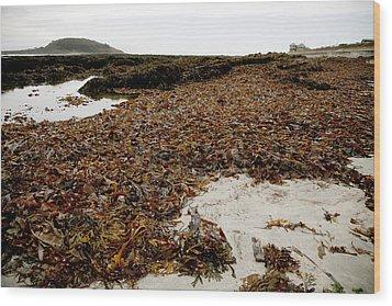 Seaweed Covered Beach Wood Print by Dr Keith Wheeler