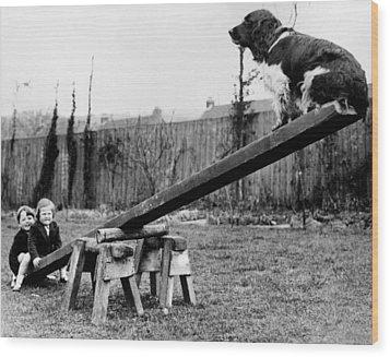 See-saw Dog Wood Print by Fox Photos