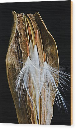 Wood Print featuring the photograph Seed Pod-3- St Lucia by Chester Williams