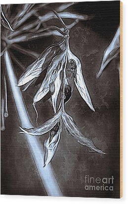 Seeds And Seedpods Wood Print by Judi Bagwell