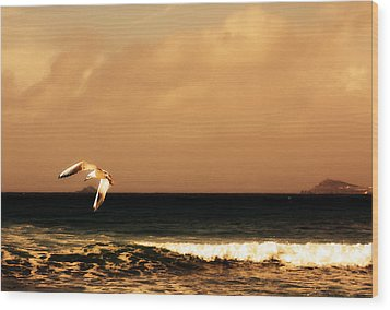 Sennen Seagull Wood Print by Linsey Williams