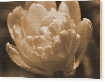Sepia Tulip Frill Wood Print by Peg Toliver
