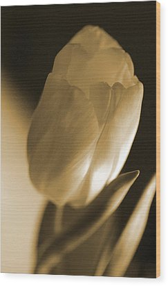 Sepia Tulip Wood Print by Peg Toliver