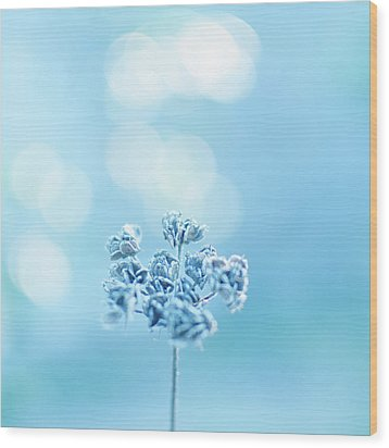 September Frost Wood Print by Alexandre Fundone