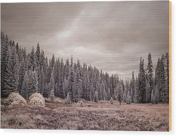 Wood Print featuring the photograph Sequoia by Mike Irwin