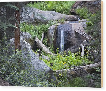 Sequoia Waterfall Wood Print by Anthony Citro