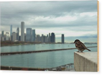 Serenity Of Chicago Wood Print