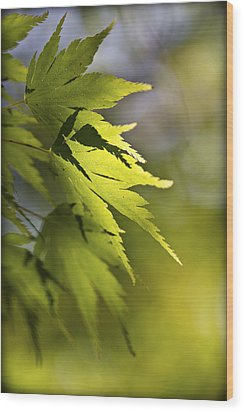 Wood Print featuring the photograph Shades Of Green And Gold. by Clare Bambers