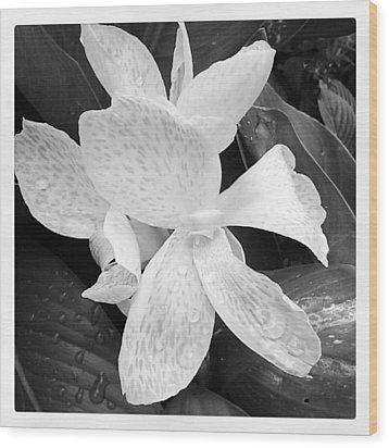 Shades Of Grey Wood Print by Chasity Johnson