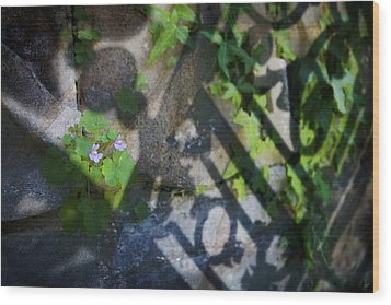Wood Print featuring the photograph Shadow Garden by Richard Piper