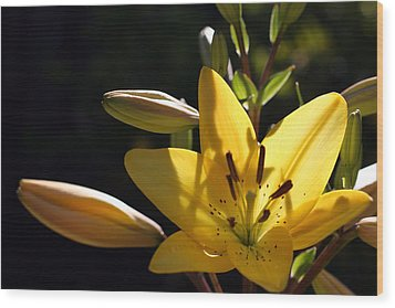 Shadow Lilly Wood Print by Wendi Curtis