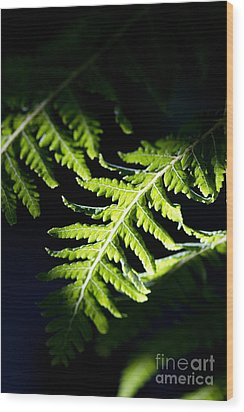 Shadow On Leaf -7 Wood Print by Tad Kanazaki