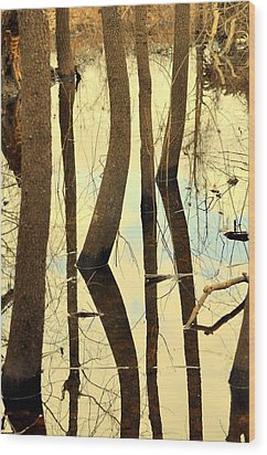 Shadow Trees Wood Print by Marty Koch