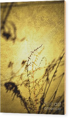 Shadows Wood Print by Rossi Love