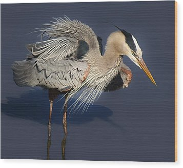 Shaking Out My Tail Feathers Wood Print by Paulette Thomas