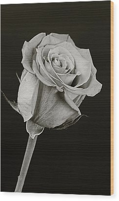 Sharp Rose Black And White Wood Print by M K  Miller