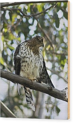 Wood Print featuring the photograph Sharp Shinned Hawk - Winged Stare -5459 by James Ahn