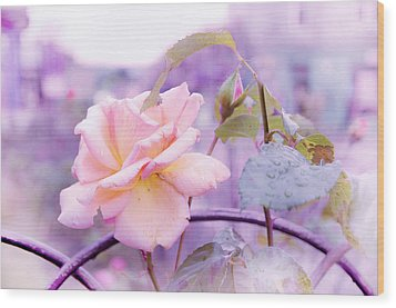 She Like The Ghost Beside Me. Scottish Rose Wood Print by Jenny Rainbow