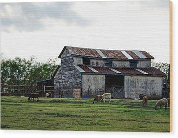 Sheep Barn Wood Print by Lisa Moore