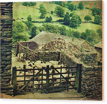 Sheep Gate Wood Print