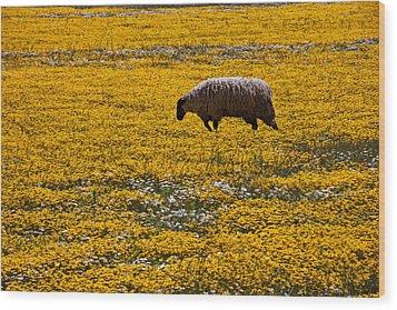 Sheep In Meadow Of Golden Flowers Wood Print by Garry Gay