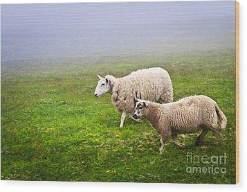 Sheep In Misty Meadow Wood Print by Elena Elisseeva