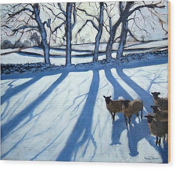 Sheep In Snow Wood Print by Andrew Macara