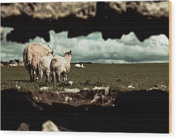 Wood Print featuring the photograph Sheep In The Wall by Justin Albrecht