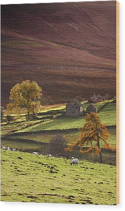 Sheep On A Hill, North Yorkshire Wood Print by John Short