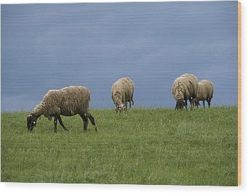 Sheep Wood Print by Pan Orsatti